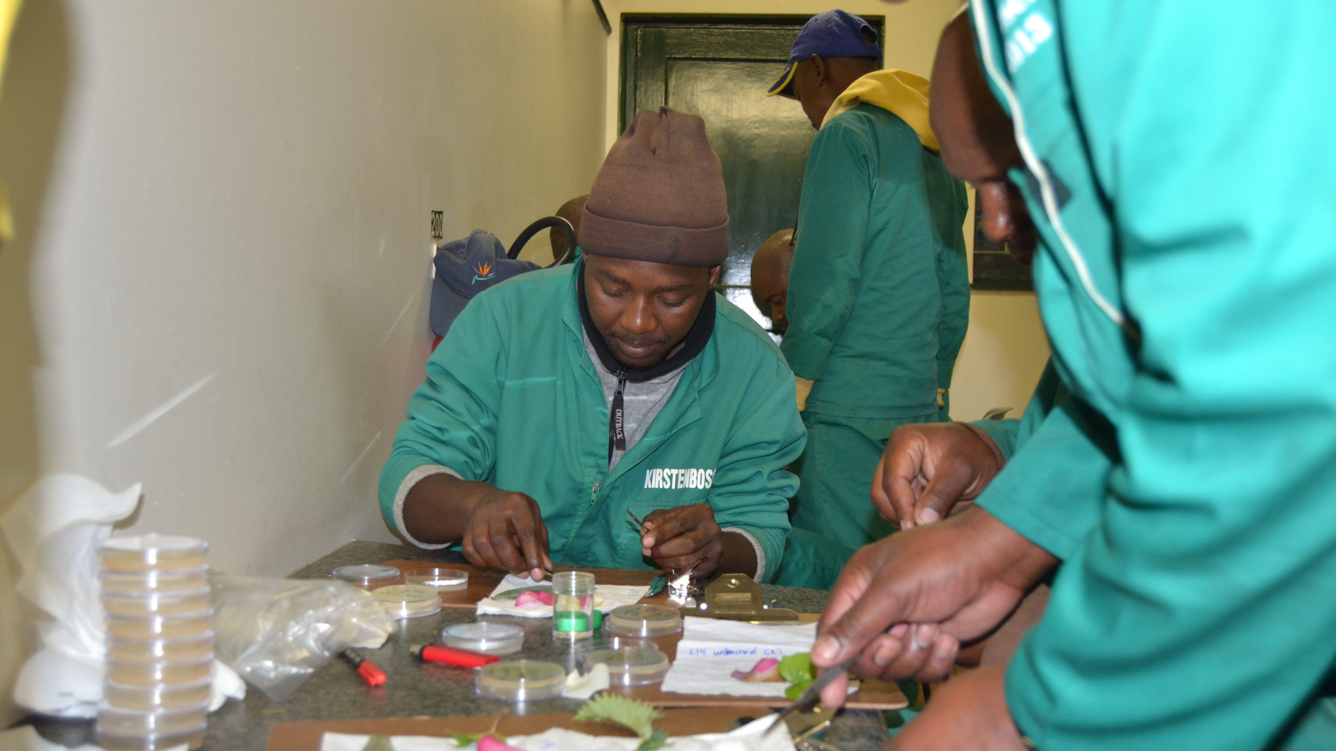 Kirstenbosch staff isolating pathogens